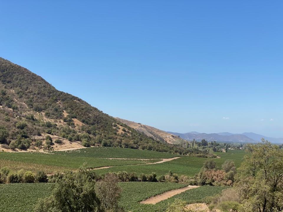 Viña Vik vineyards in Chile's Millahue Valley