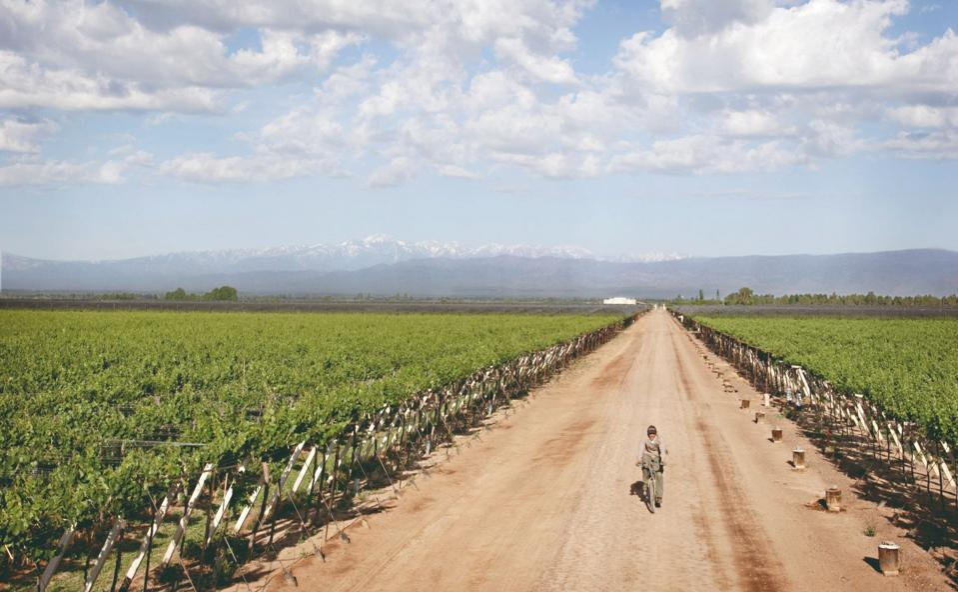 South American wine, organic wine, Zuccardi