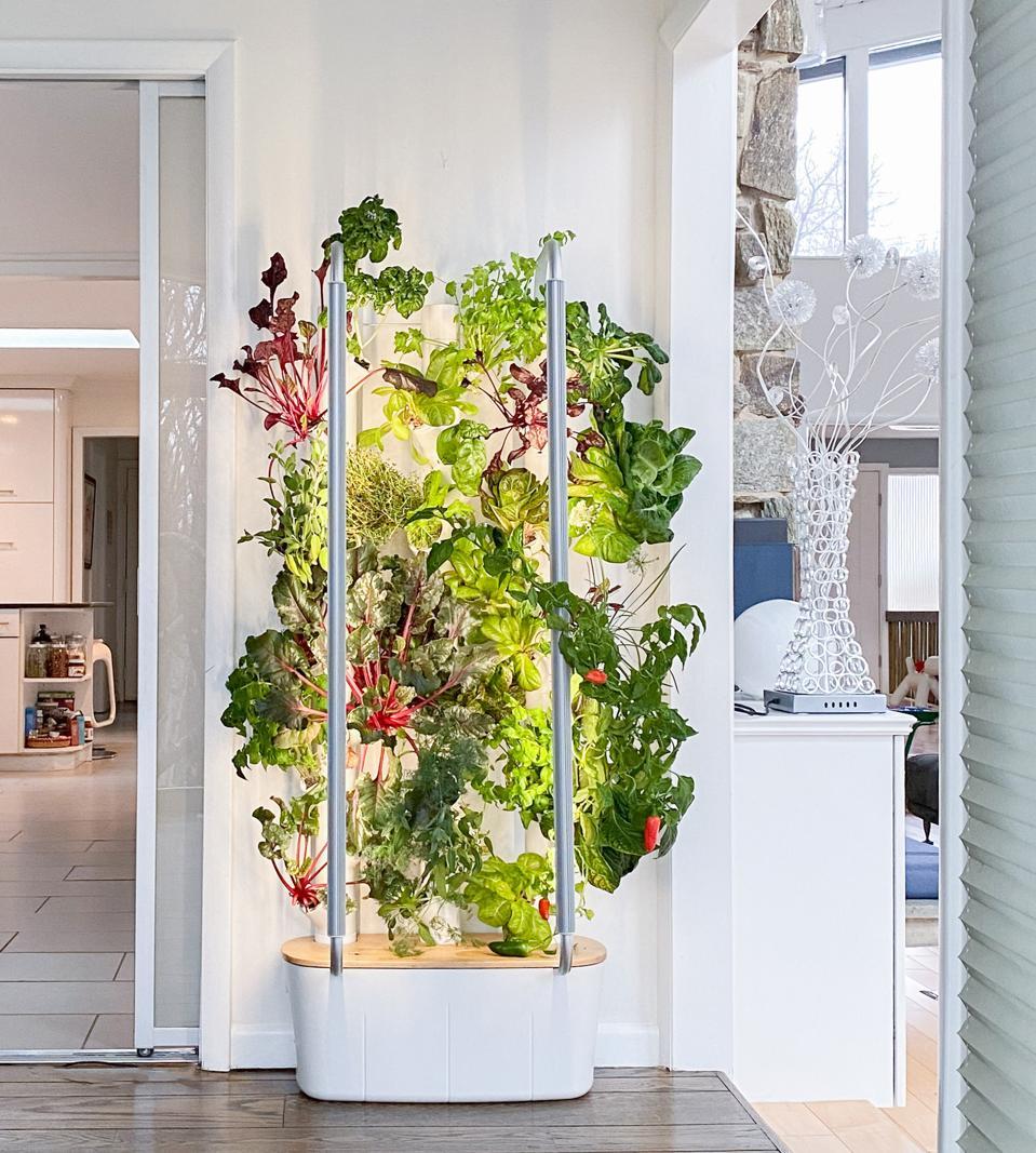 A Gardyn indoor vertical hydroponic system.