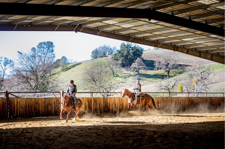 Goldman Sachs, Fred Steck, equestrian,