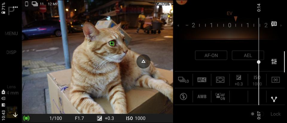 Real-time Eye AF tracking a cat's eye.