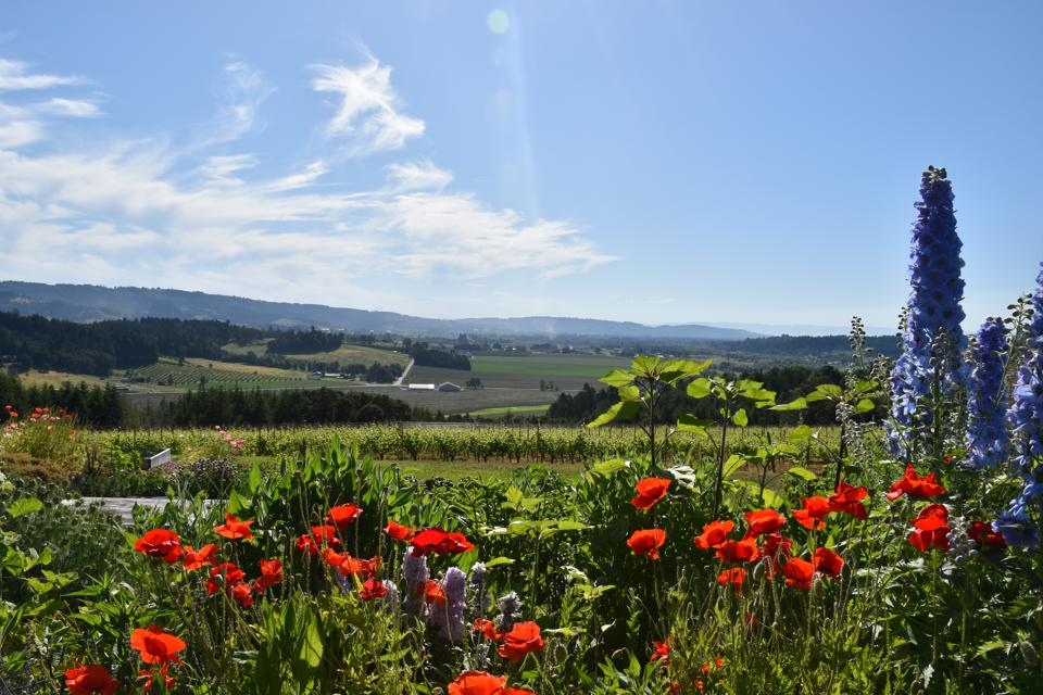 View of Willamette Valley's Yahmill-Carlton AVA from Penner Ash Winery