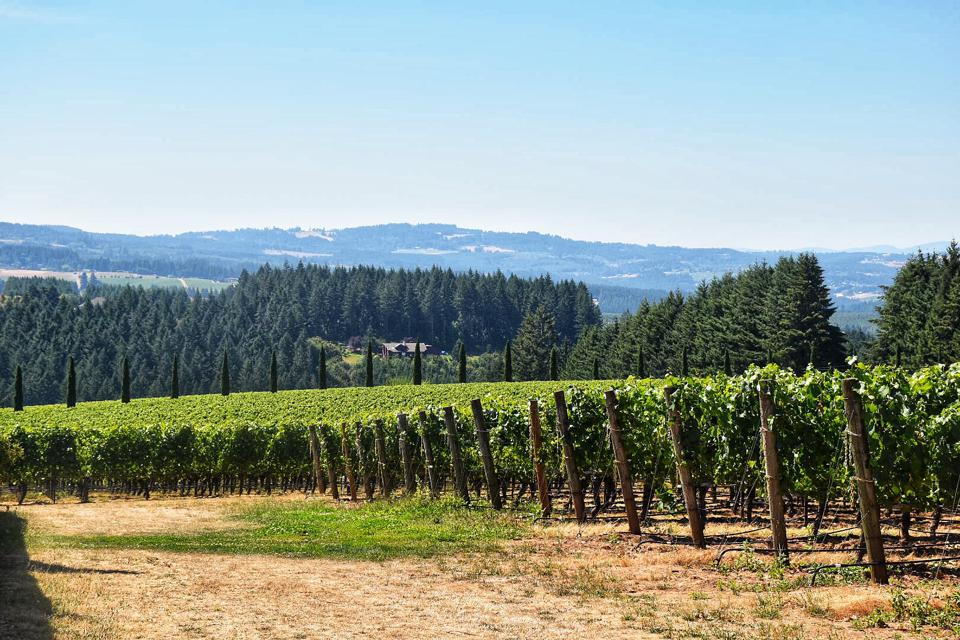 A view of Willamette Valley's Chehalem Mountain AVA from Alloro Vineyard