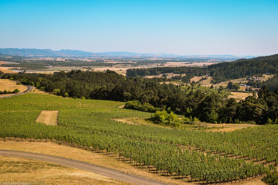 A view of Willamette Valley's McMinnville AVA from Youngberg Hills Winery