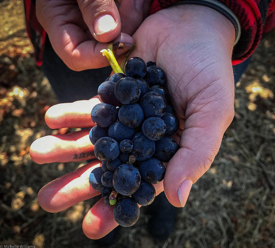 Petaluma Gap is defined by the wind - the grapes have balance, high acidity, and skin tannins that give the wine texture.