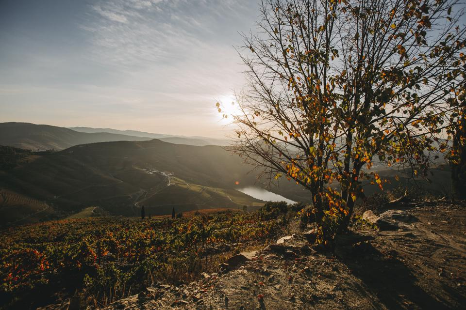 Ventozelo has a network of hiking trails through the vineyards of the Douro Valley,