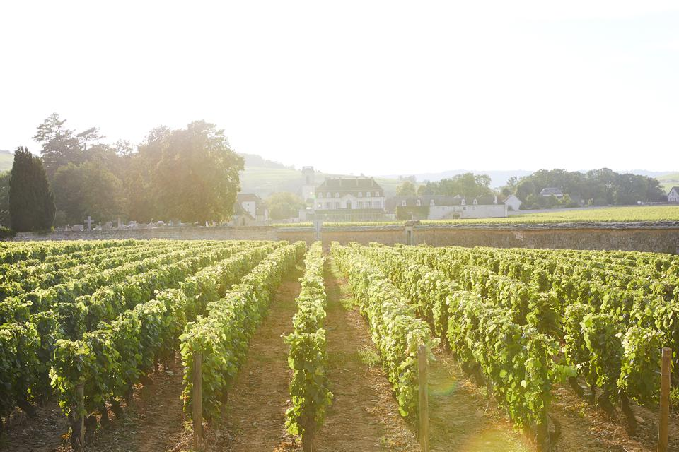 The Château De Pommard vineyard in Burgundy, France.