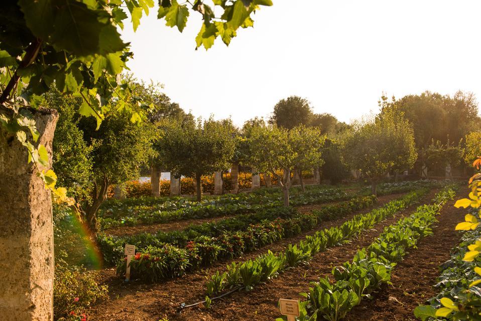 organic farm garden at Puglia luxury hotel farmhouse masseria Torre Coccaro