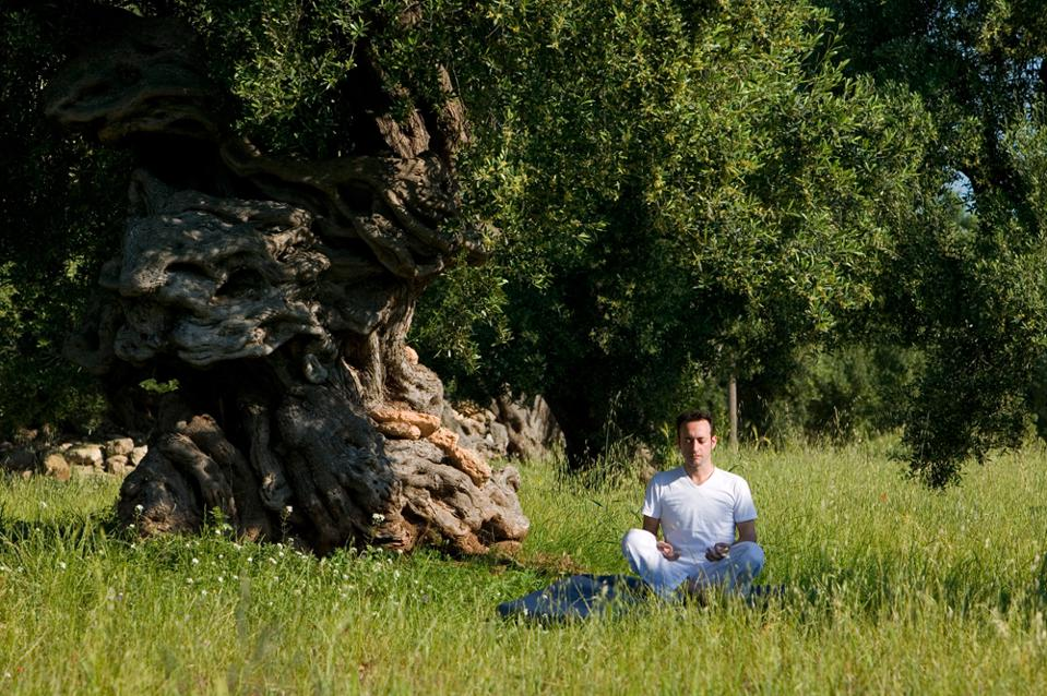 Man does yoga in the Puglia fields by an ancient olive tree Masseria Torre Coccaro