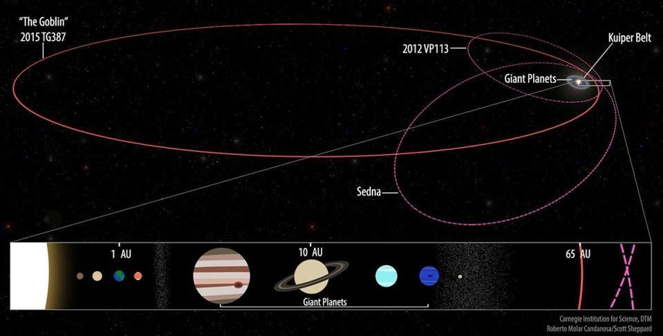 The orbits of Sedna, Biden and″The Goblin.″