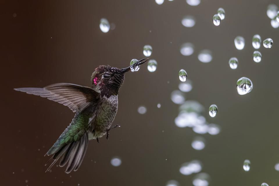 Hummingbird among water bubbles