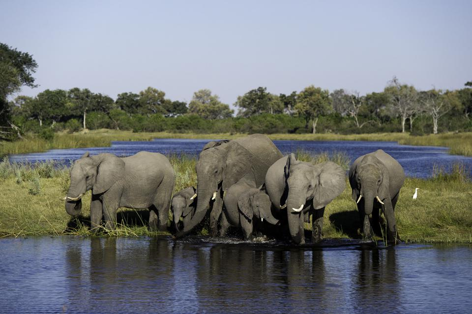 Conservation Africa News - DumaTau Camp, Botswana
