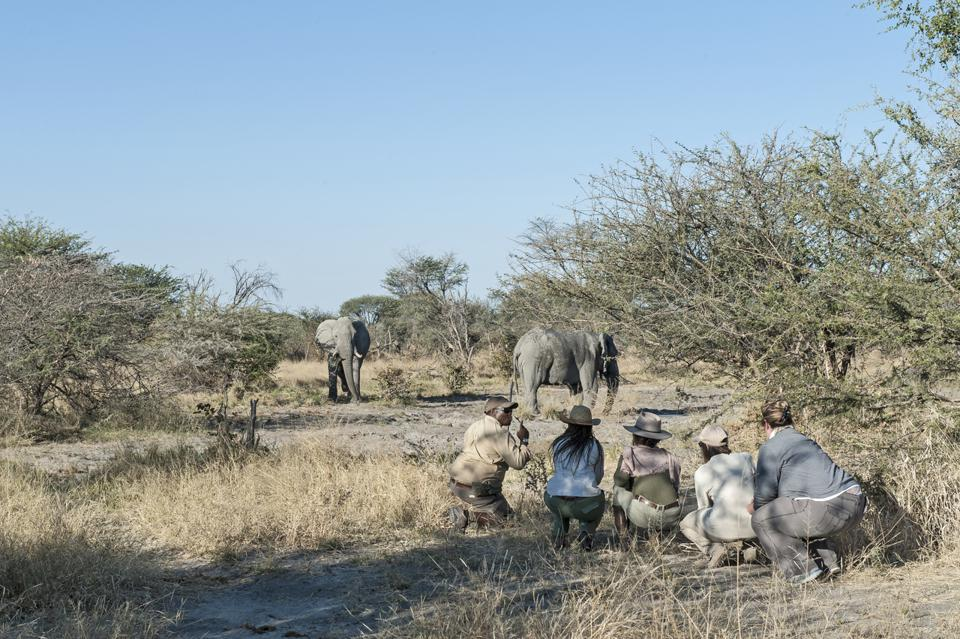 Conservation Africa News - Bush walk with Explorations guides at Gomoti Tented Camp