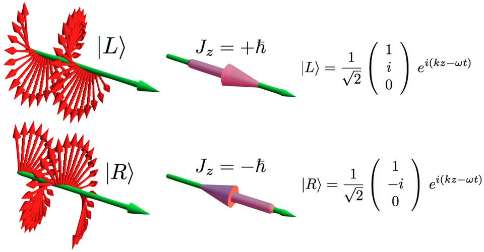 Polarizations of left and right-handed photons.