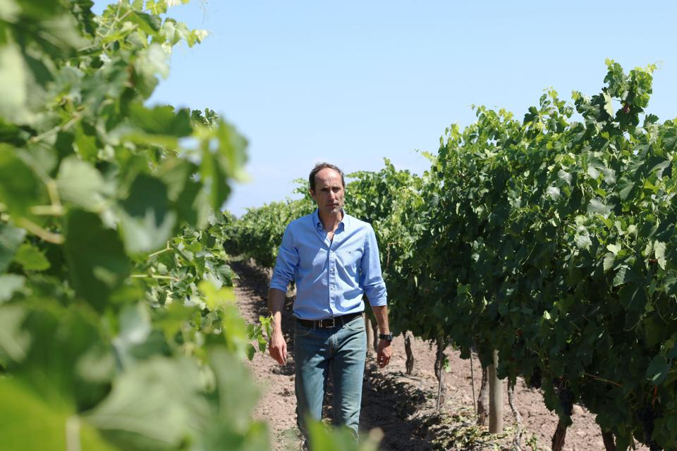 Costa & Pampa Director of Viticulture Marcelo Belmonte among the vines.