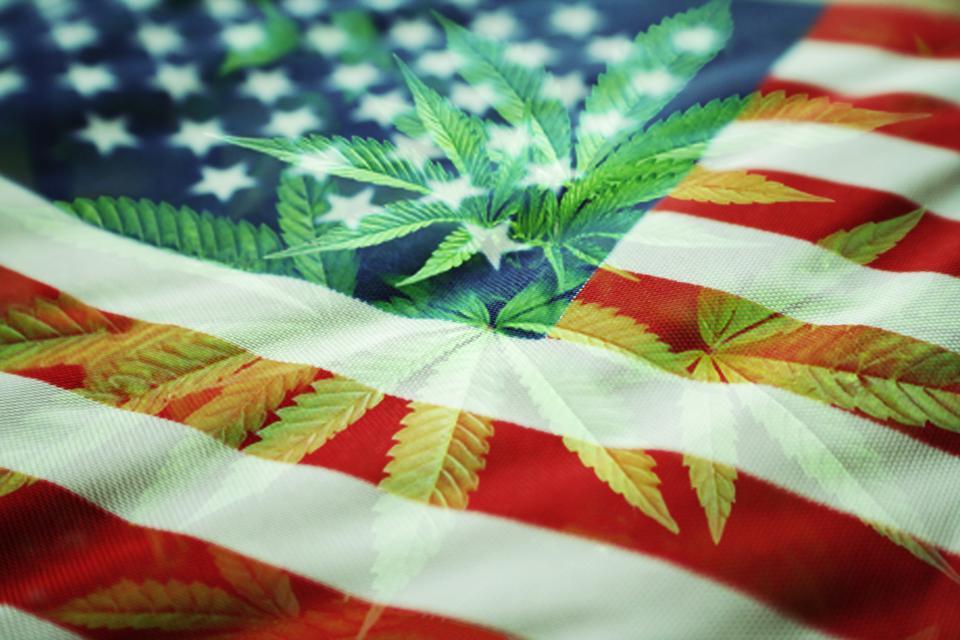 Marijuana leaves overlay an American flag