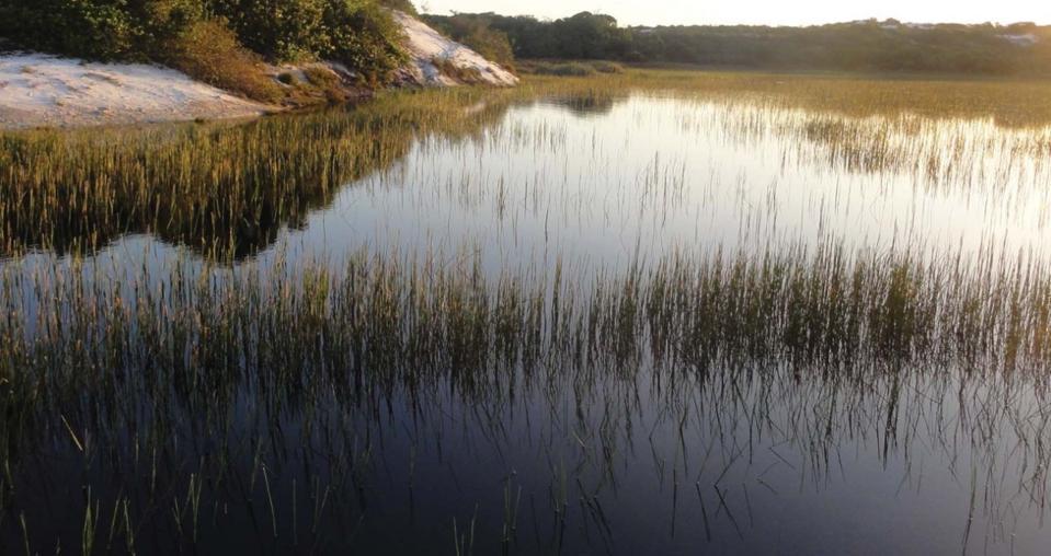 Wetlands in Dune Park in Salvador, Bahia