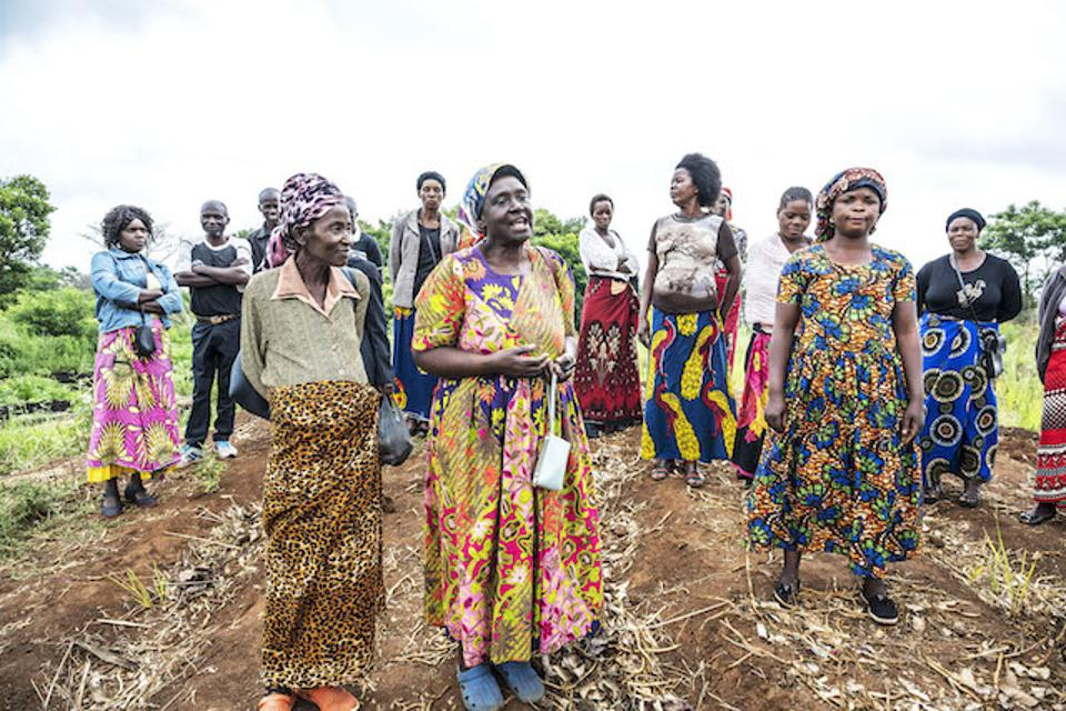 The farmers supported by Kagem's farming co-ops.
