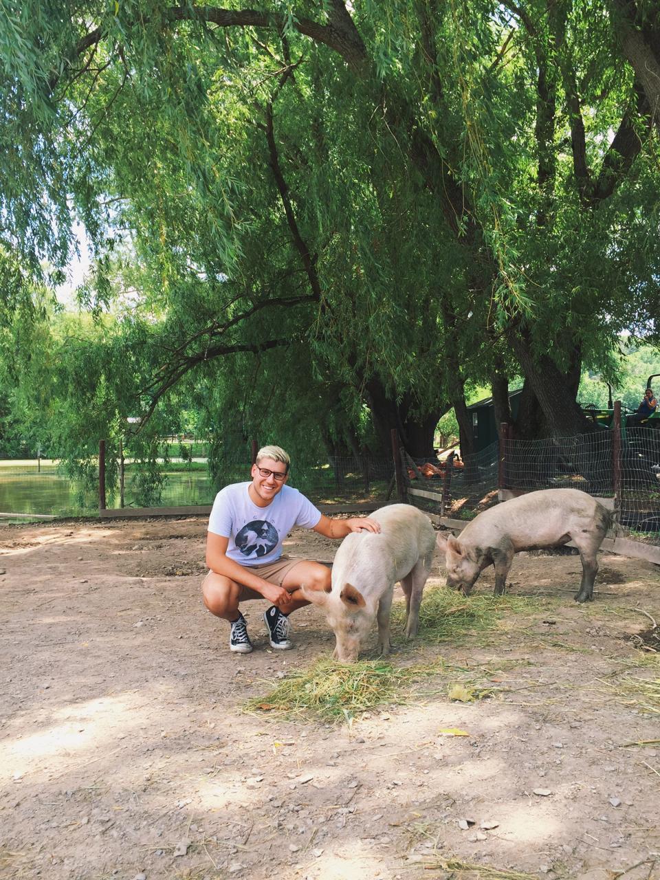joe loria from world animal protection pets a pig