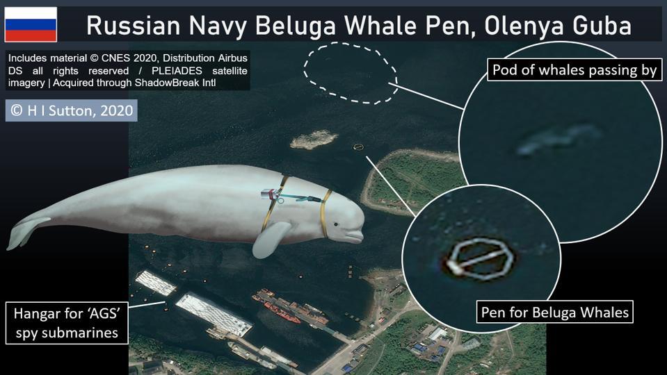 Russian Navy Beluga Whale base in the Kola peninsular, Russian Arctic