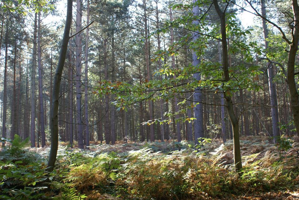Blean Woods 1 - Credit - Ray Lewis