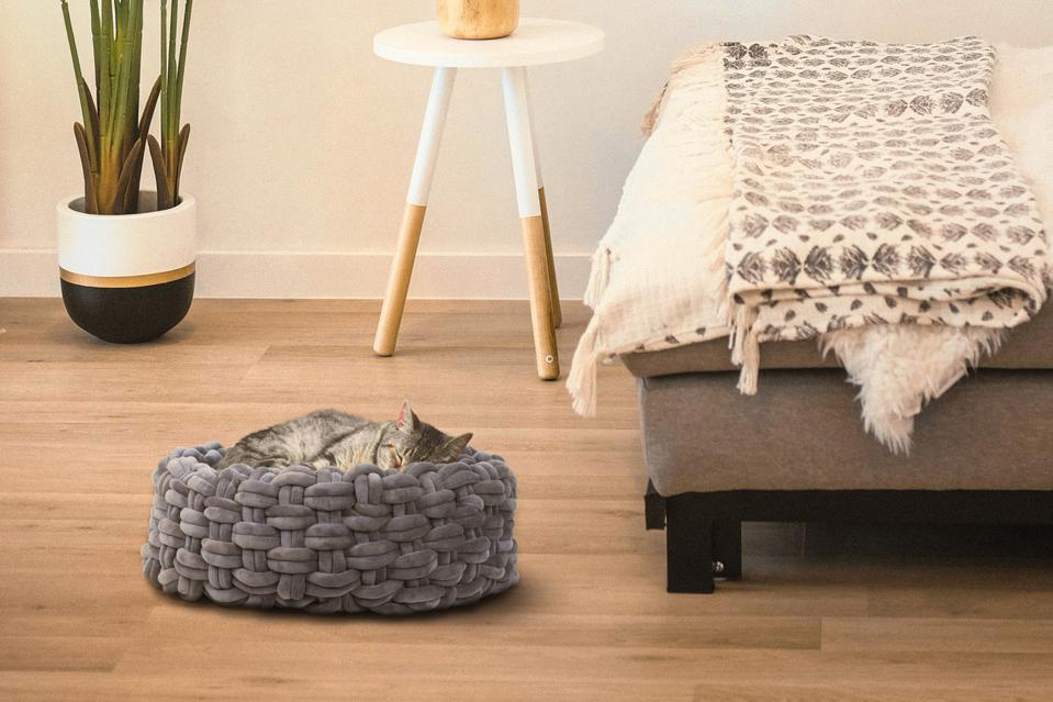 cat in a woven bed