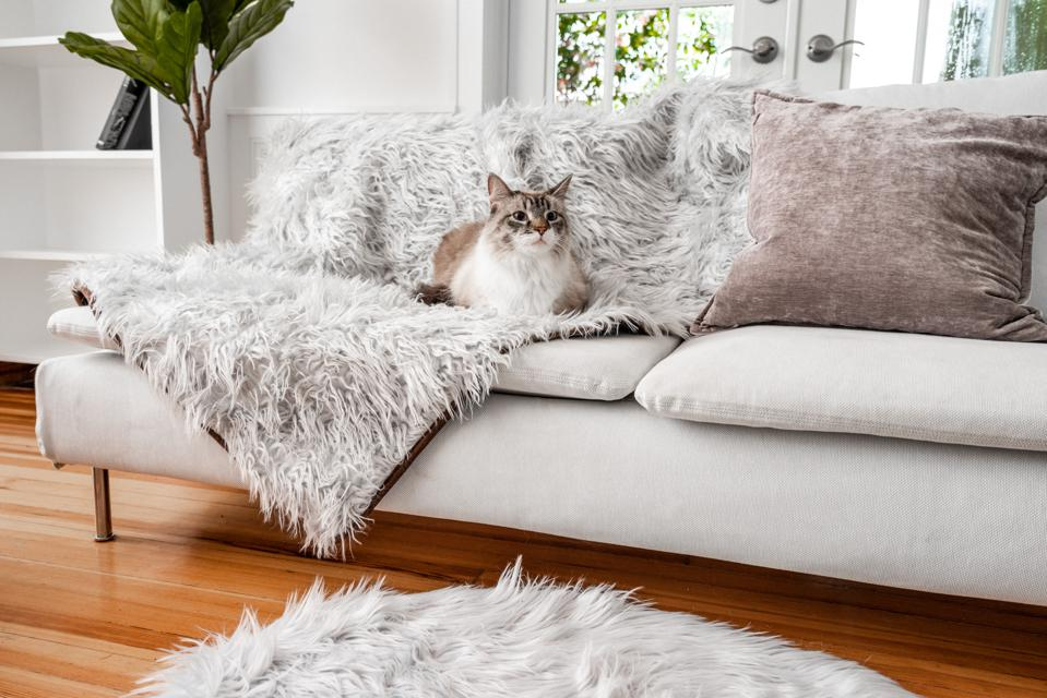 cat on a furry blanket on sofa