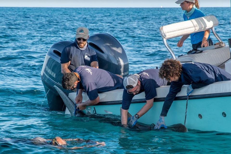 Manny viene taggato dal team di Beneath The Waves.