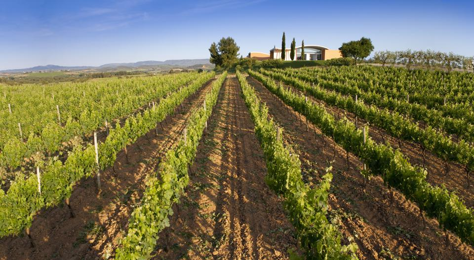 Rows of vines at the Jean Leon winery in Penedès outside Barcelona.