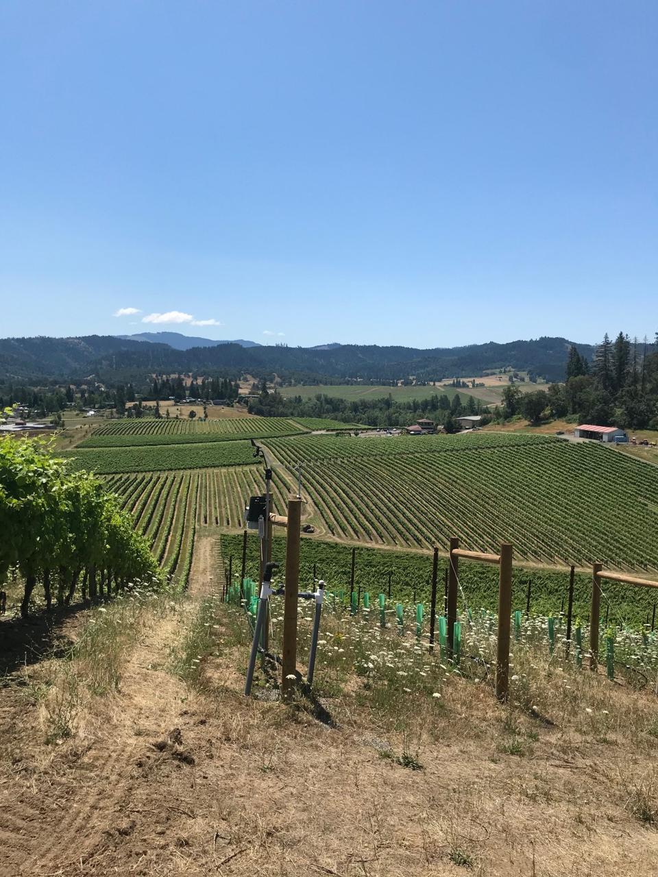 Abacela vineyards in Roseberg.