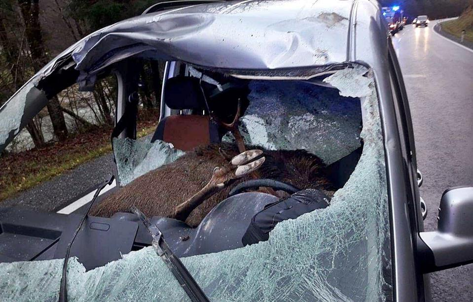 A deer lands on the driver's seat