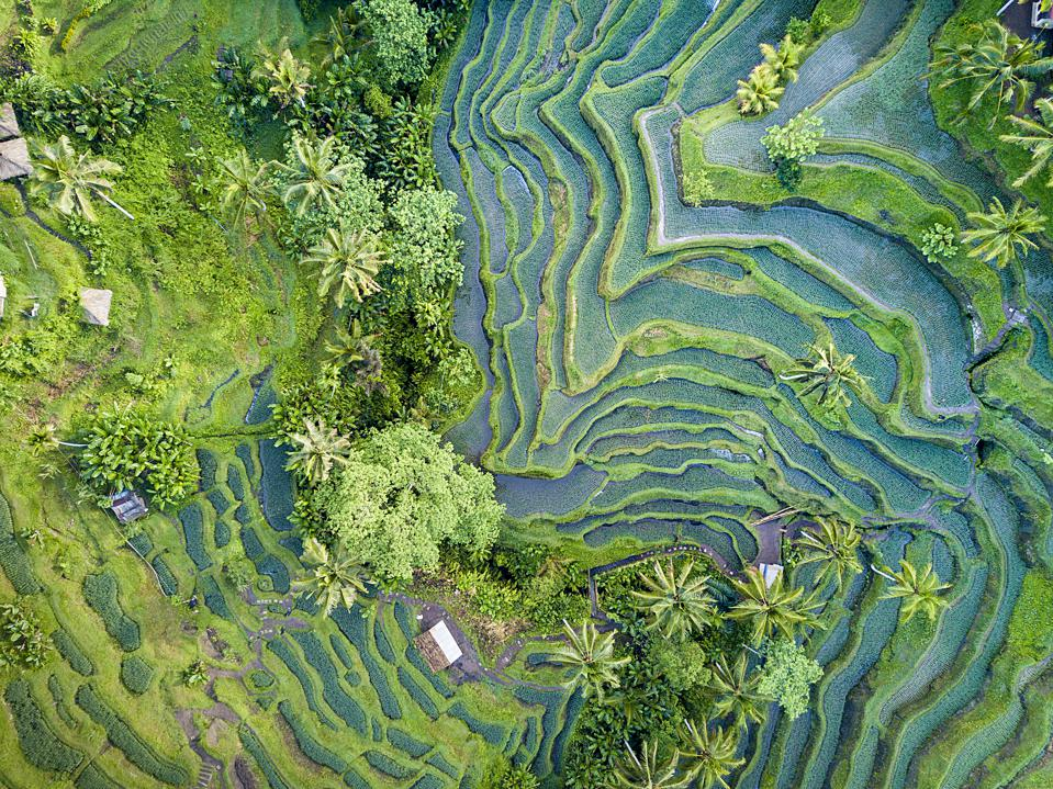 Aerial view of Rice Terrace in Bali Indonesia