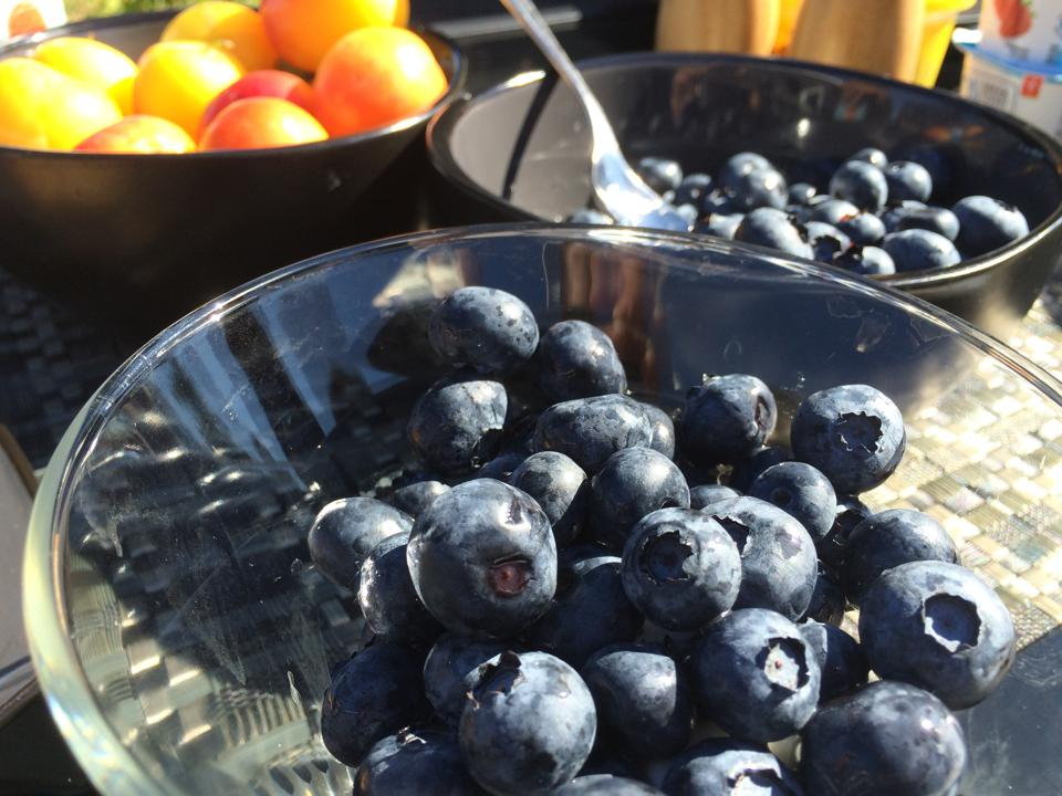 Two bowls of blueberries sit in the sun, with a bowl of nectarines in the background
