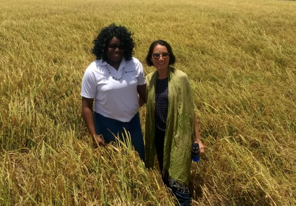 Staff from the Food and Agriculture Organisation conducting a site visit at a rice field in Guyana.