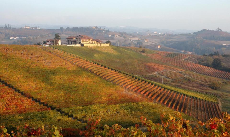 Estate vineyards of Pecchenino, Dogliani, Piedmont
