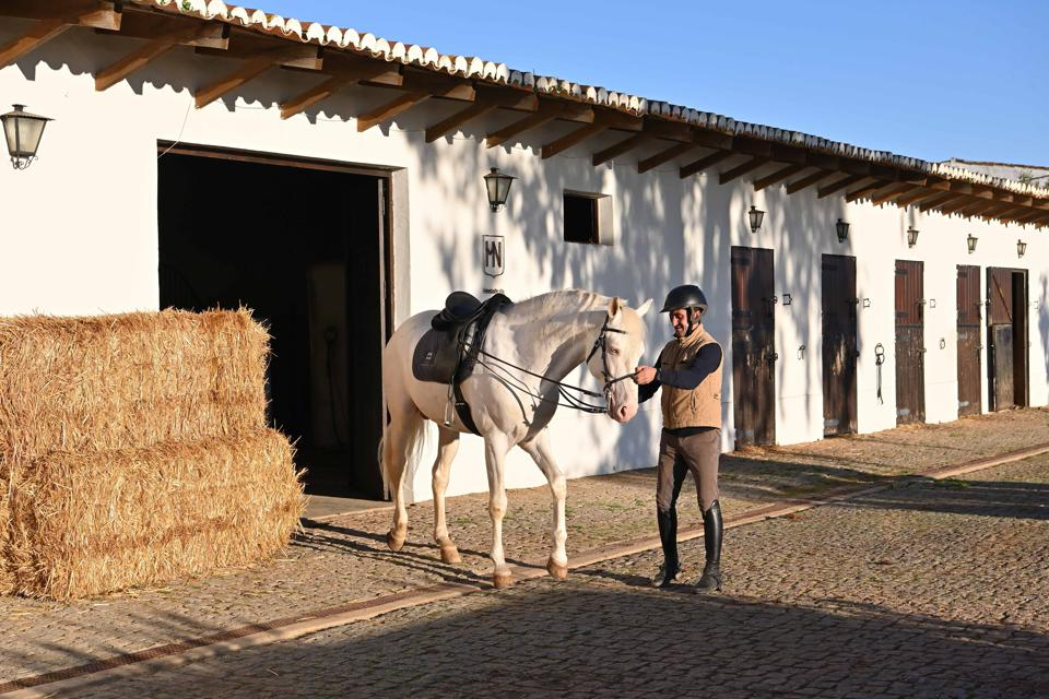 A Lusitano horse leaves the stable at Herdade da Malhadinha Nova in Portugal.