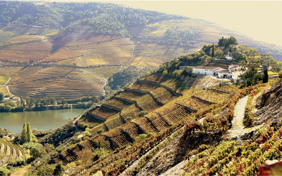 World's Best Vineyards is an annual list of the top 50 wine-tourism experiences.