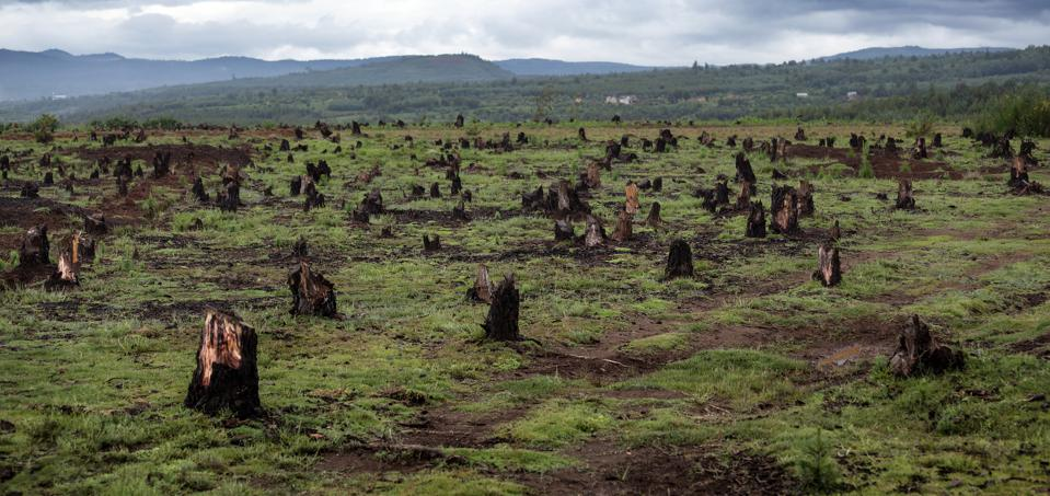 Deforestation where thousands of trees have been chopped down.