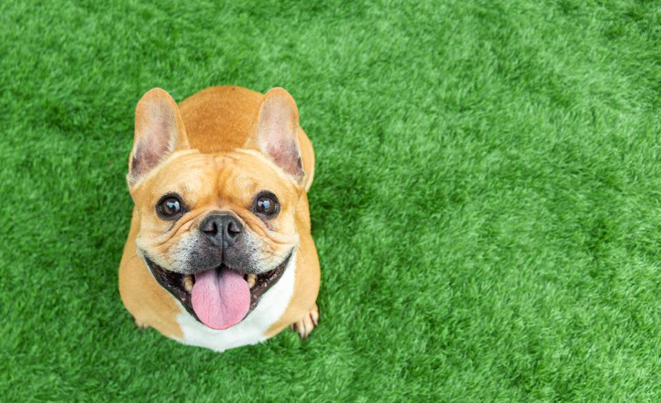 Veterinarians are reluctant to weigh in on CBDs for dogs but owners are  buying large amounts of products nevertheless.