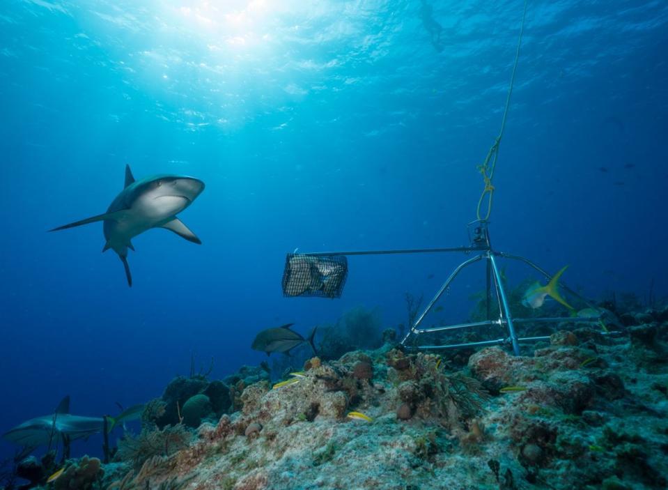 Shark on a reef