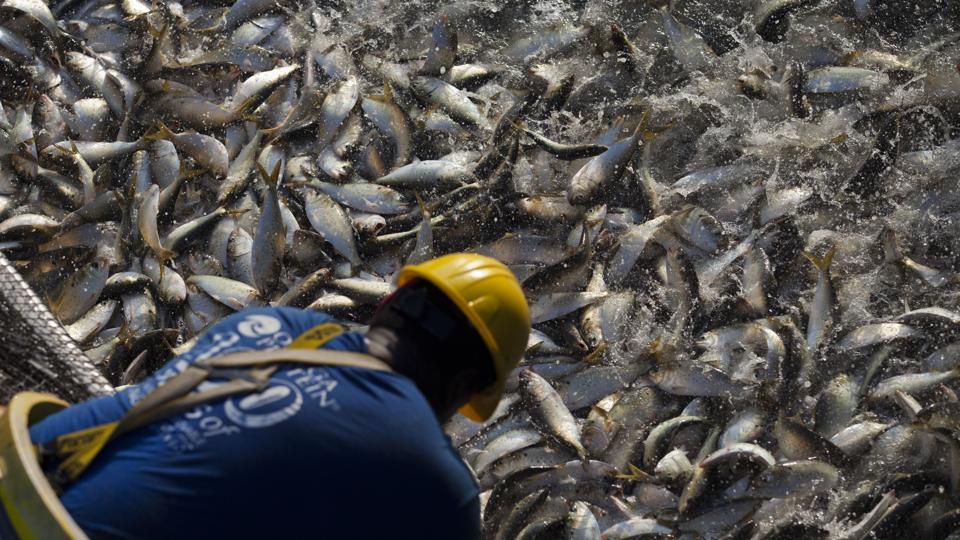 US-ENVIRONMENT-ECONOMY-LABOR-FISHING-OMEGA