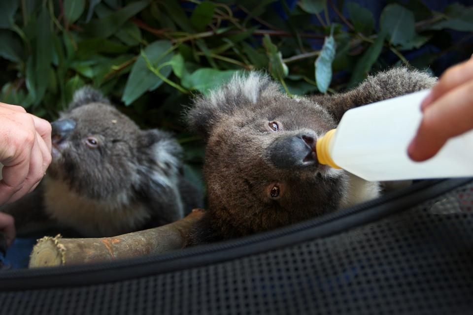 Kangaroo Island Begins Recovery Process Following Devastating Bushfire Season