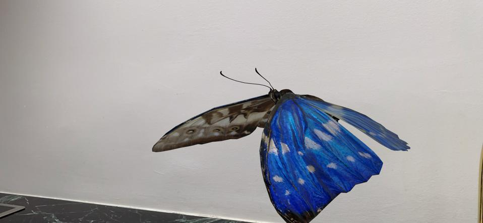 A morpho butterfly flaps its gorgeous wings in my kitchen. Not to scale.