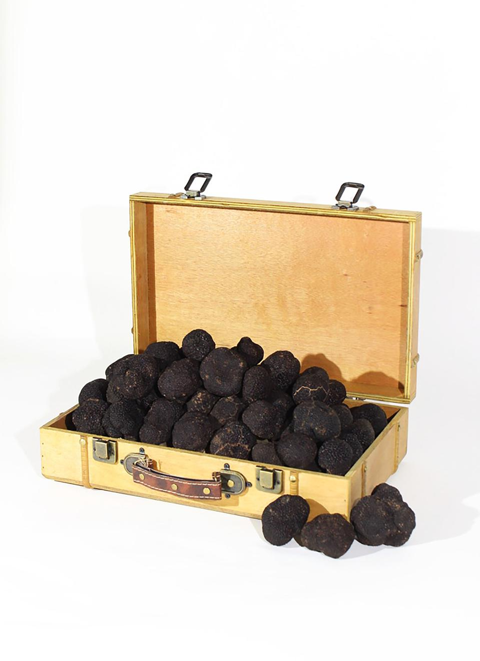 A golden suitcase filled with black truffles