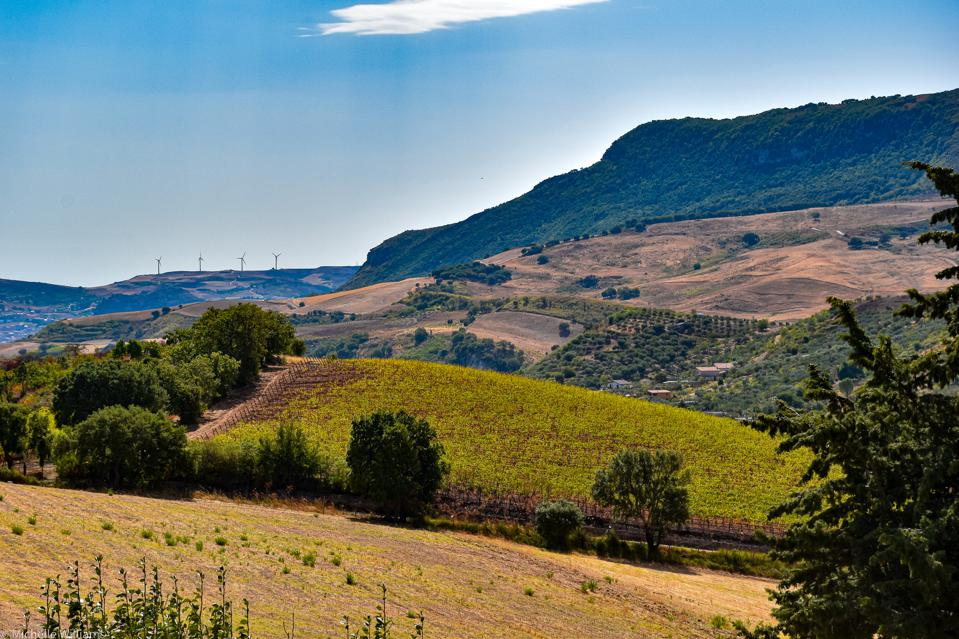 Gorghi Tondi's San Nicola vineyards rest inside an 828-acre nature preserve operated by the World Wildlife Fund.