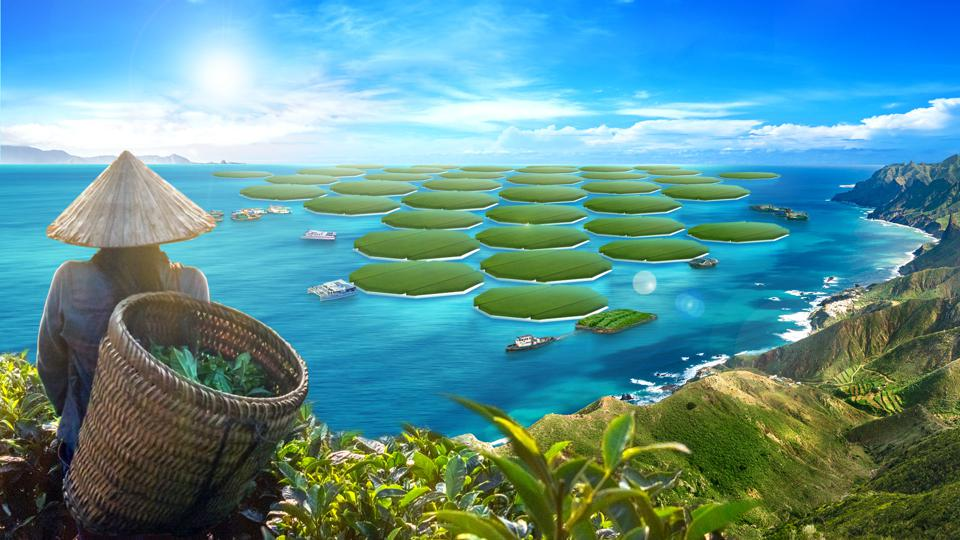 Farms of rice on the ocean