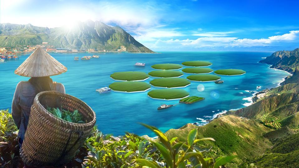 Rice fields on the ocean
