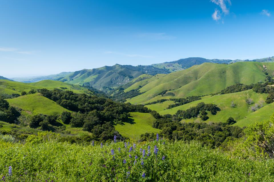 A beautiful spring/summer scene with blue lupine wildflowers in the foreground of a vast landscape of lush green fields, hills, and mountains
