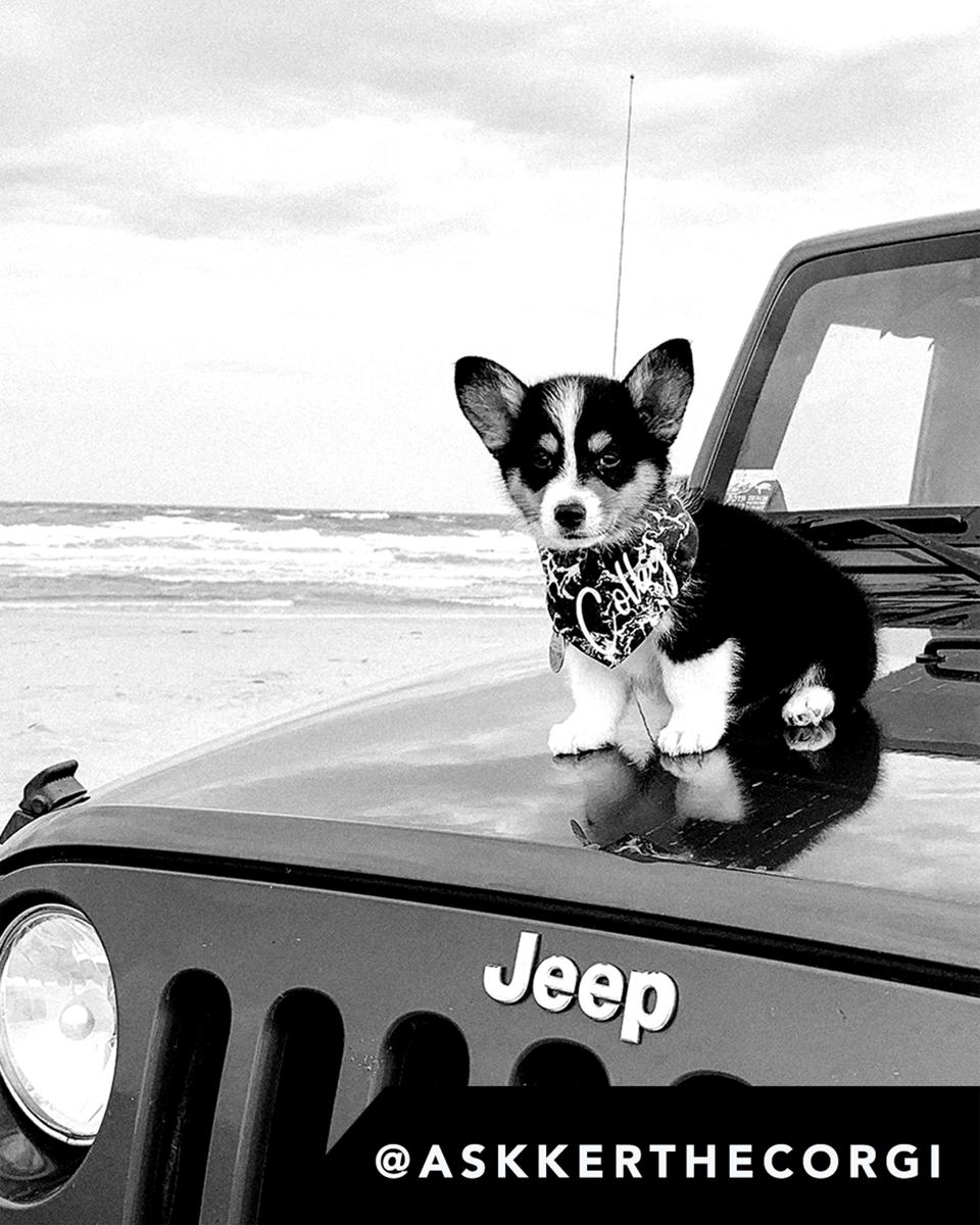 Jeep's ″Top Canine″ campaign.