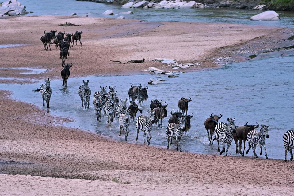 KENYA-NATURE-WILDLIFE